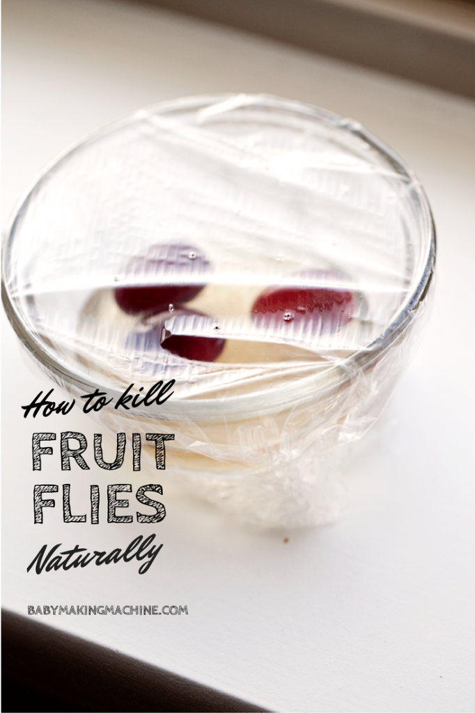 An easy photo and video tutorial for killing fruit flies naturally using household items. Get rid of those pests for good!