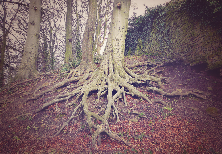 making-strong-roots