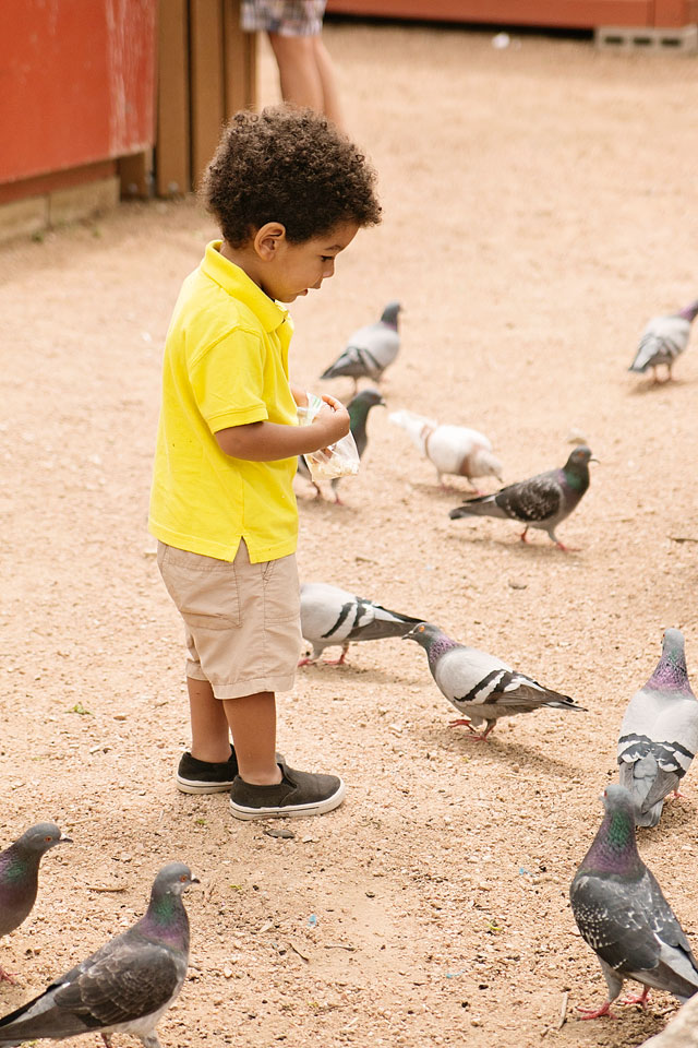 Ty-with-pigeons