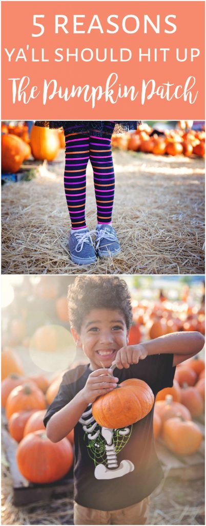 5 reasons you should go to the pumpkin patch. Even if you don't cave the pumpkin.