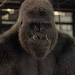 The One and Only Ivan disney movie review gorilla