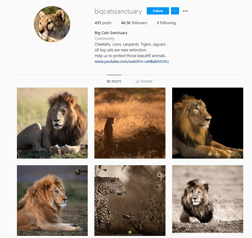 Big Cats Sanctuary Instagram - Educational Resources for Animal Lovers